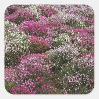 Flor rosado, blanco y púrpura de los arbustos calcomanía cuadradas personalizada