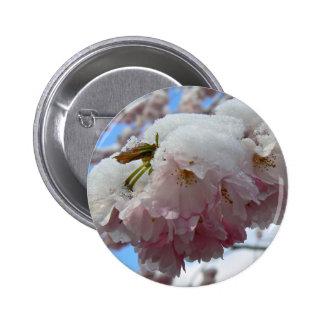 Flor rosado con la nieve, primavera