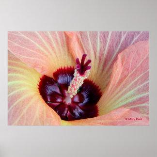 Flor rosado de Hau Posters