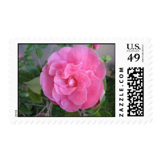 Flor rosado de la camelia sello