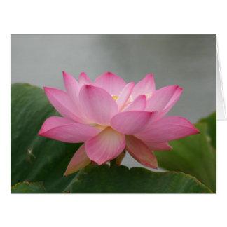 Flor rosado de Lotus Tarjetón