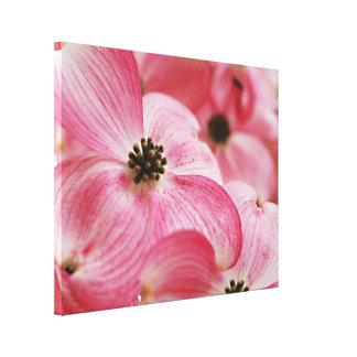 Flor rosado del árbol de Dogwood Impresión En Lienzo Estirada