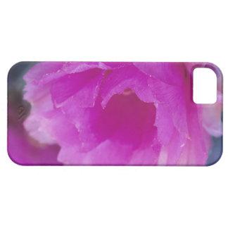 Flor rosado del cactus de erizo (Echinocereus iPhone 5 Fundas