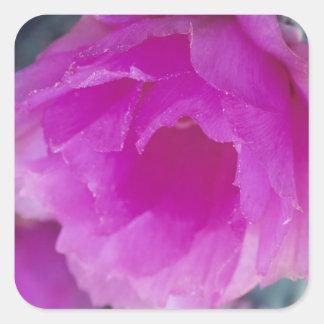 Flor rosado del cactus de erizo (Echinocereus Pegatina Cuadrada