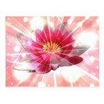 flor rosado del loto postal