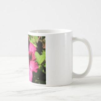 Flor rosado del Pelargonium Tazas