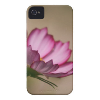 Flor rosado del picote del cosmos iPhone 4 carcasas