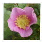 Flor rosado del rosa de arbusto azulejos ceramicos