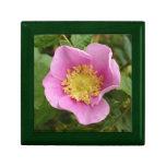 Flor rosado del rosa de arbusto caja de regalo