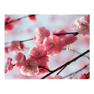 Flor rosado tarjetas postales