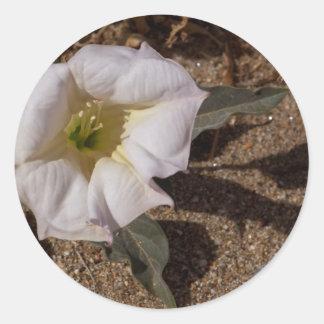 Flor sagrada de la datura del desierto de Anza Bor Etiquetas Redondas