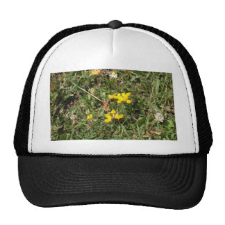 Flor salvaje amarilla gorra