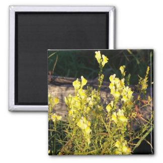 Flor salvaje amarilla imán cuadrado