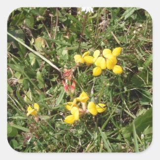 Flor salvaje amarilla pegatina cuadrada