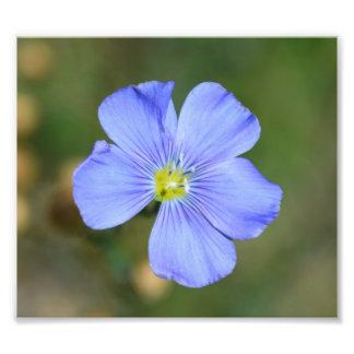 Flor salvaje azul clara cojinete
