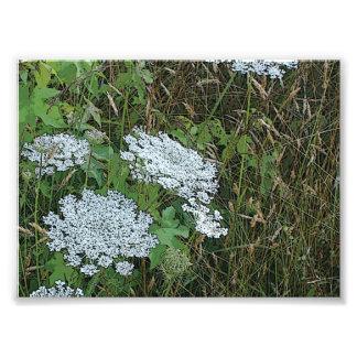 Flor salvaje blanca del cordón de la reina Anne Fotografía