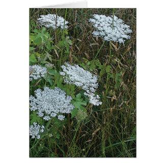 Flor salvaje blanca del cordón de la reina Anne Tarjeta Pequeña