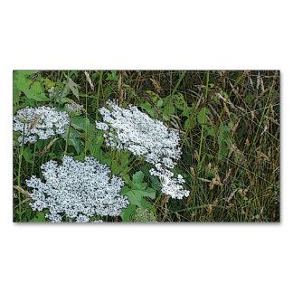 Flor salvaje blanca del cordón de la reina Anne