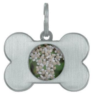 Flor salvaje blanca placa de mascota