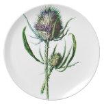 Flor salvaje de la antigüedad del cardo del escocé plato de comida