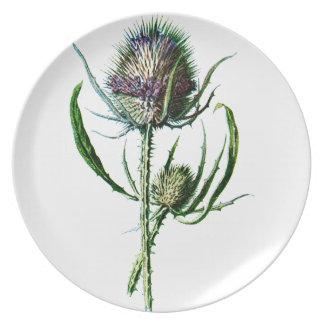 Flor salvaje de la antigüedad del cardo del escocé plato de cena