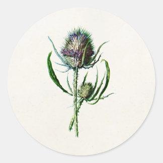 Flor salvaje del cardo escocés viejo del vintage 1 pegatina