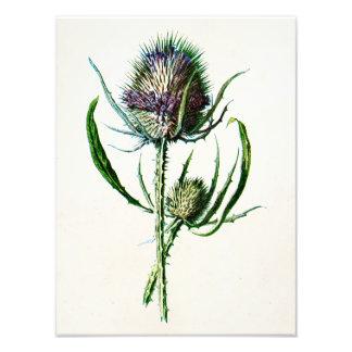 Flor salvaje del cardo escocés viejo del vintage fotografía