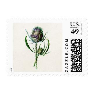 Flor salvaje del cardo escocés viejo del vintage sello