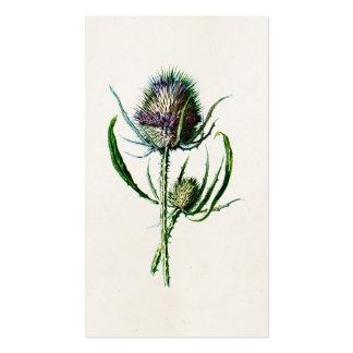 Flor salvaje del cardo escocés viejo del vintage tarjetas de visita