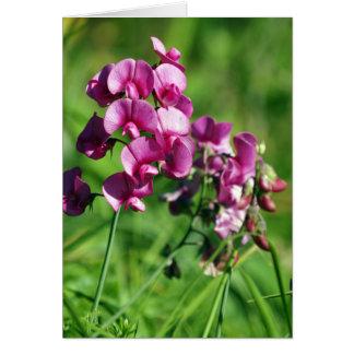 Flor salvaje del guisante de olor tarjeta de felicitación