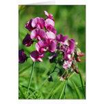 Flor salvaje del guisante de olor tarjetas