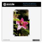 Flor salvaje del Salmonberry de la acuarela Calcomanías Para iPod Touch 4G
