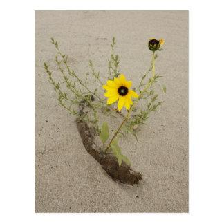 Flor salvaje en el banco de arena postales