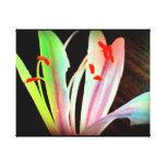 Flor salvaje impresión en lienzo estirada