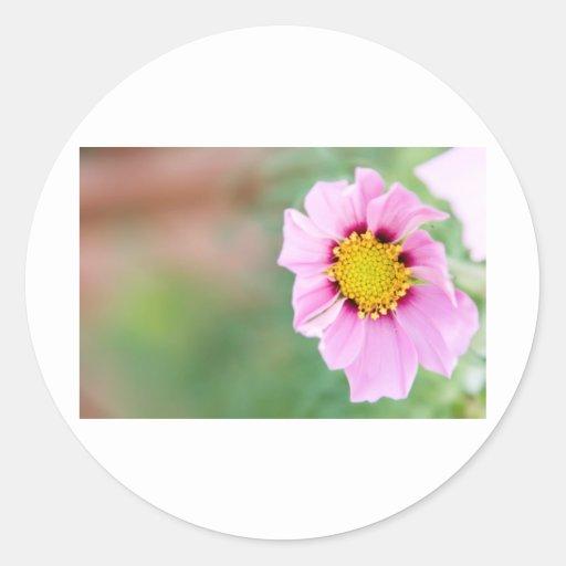 flor salvaje pegatina redonda