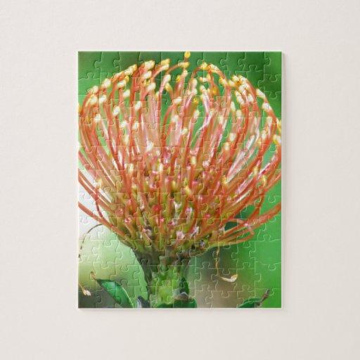 flor salvaje rompecabeza