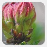 Flor salvaje rosada bud.jpg calcomanía cuadradas
