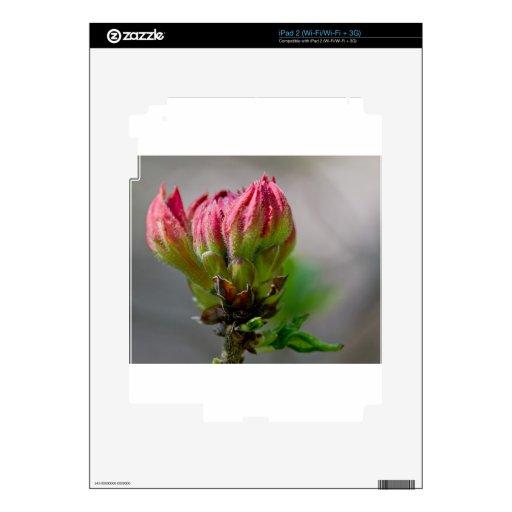 Flor salvaje rosada bud.jpg skins para iPad 2
