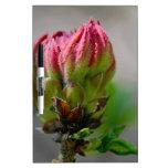 Flor salvaje rosada bud.jpg tablero blanco