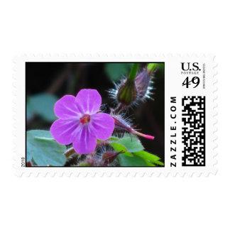 Flor salvaje violeta franqueo