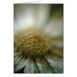 Flor secada en Brown Tarjeton