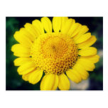 Flor soleada postal