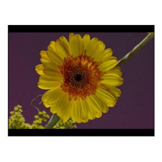 Flor soleada tarjetas postales