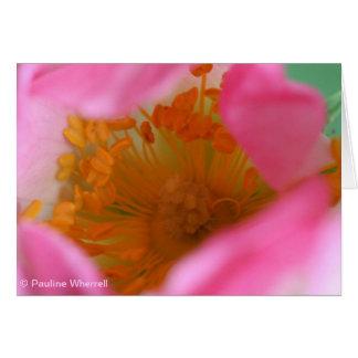 Flor soñadora elegante del rosa color de rosa de tarjeta de felicitación