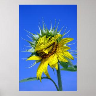 Flor sonriente póster