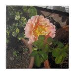 Flor subió melocotón teja