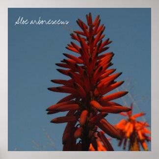 Flor suculenta roja brillante póster