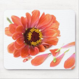 flor tapete de raton