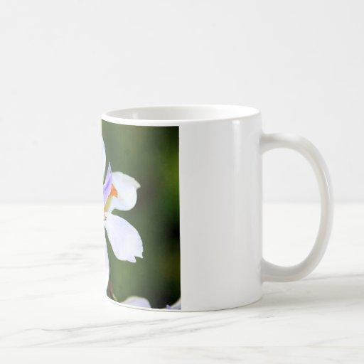 Flor Tazas De Café