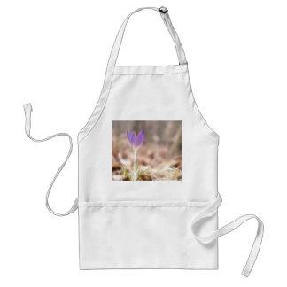 Flor temprana del azafrán de la primavera delantal